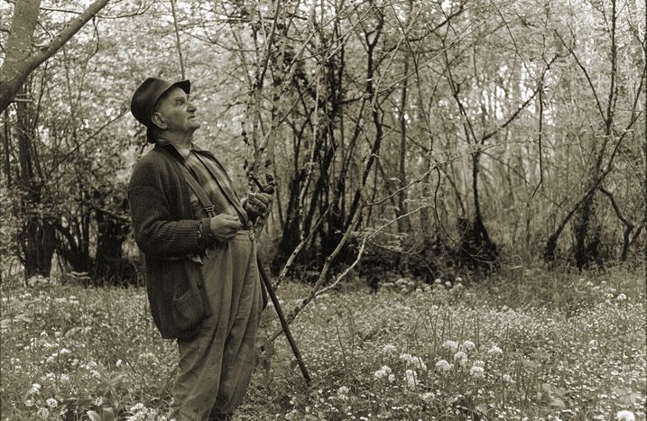 """""""Archie Parkhouse in a wood near Dolton, Devon"""" by West Country photographer James Ravilious (1939-1999), via Terri Windling"""