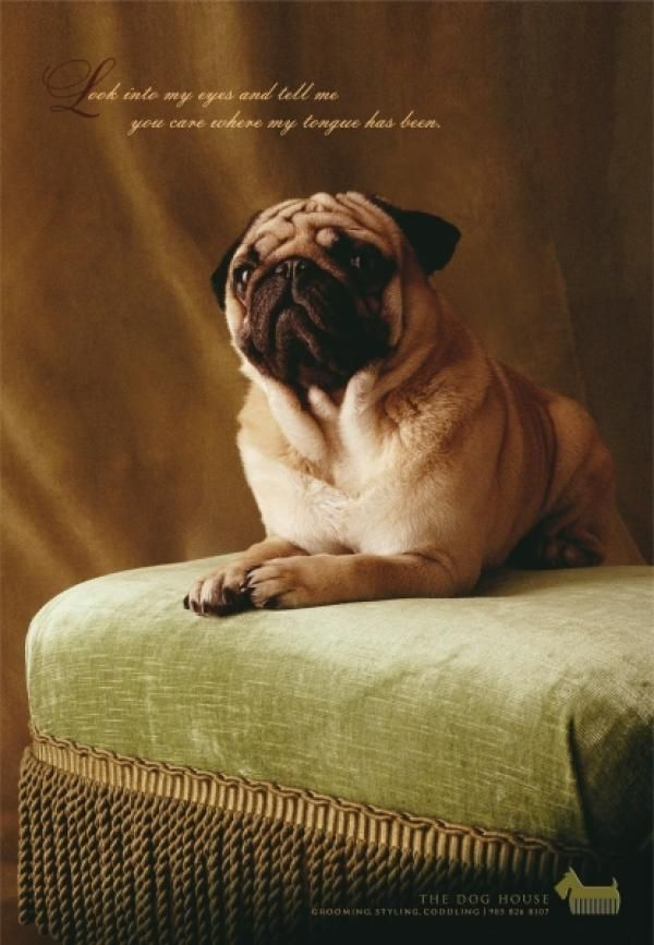 15 best grooming parlour advertising images on pinterest dog dog grooming advertising google search solutioingenieria Choice Image