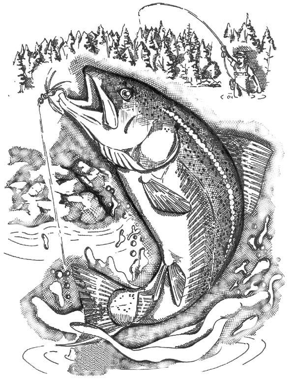 Картинки рыб для выжигания по дереву