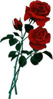Si (como afirma el griego en el Cratilo) el nombre es arquetipo de la cosa en las letras de 'rosa' está la rosa y todo el Nilo en la palabra 'Nilo'.  Y, hecho de consonantes y vocales, habrá un terrible Nombre, que la esencia cifre de Dios y que la Omnipotencia guarde en letras y sílabas cabales.
