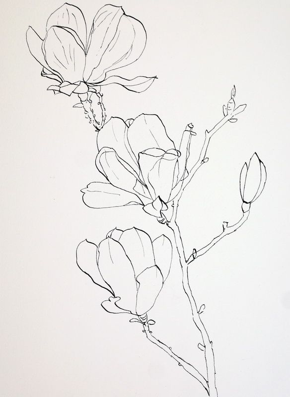 Pen Drawings of Flowers | Completed ink drawing of pink magnolia flowers prior to laying down a ...