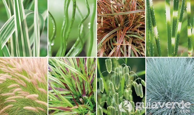 Gramíneas ornamentales, buena elección para un jardín: Buena Elección, Gramíneas Ornamentales, Anything Else, Elección Para