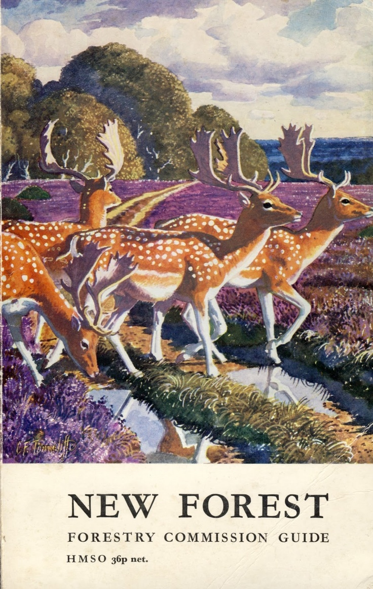 Shaun Kenaelly: Fallow Deer in the New Forest