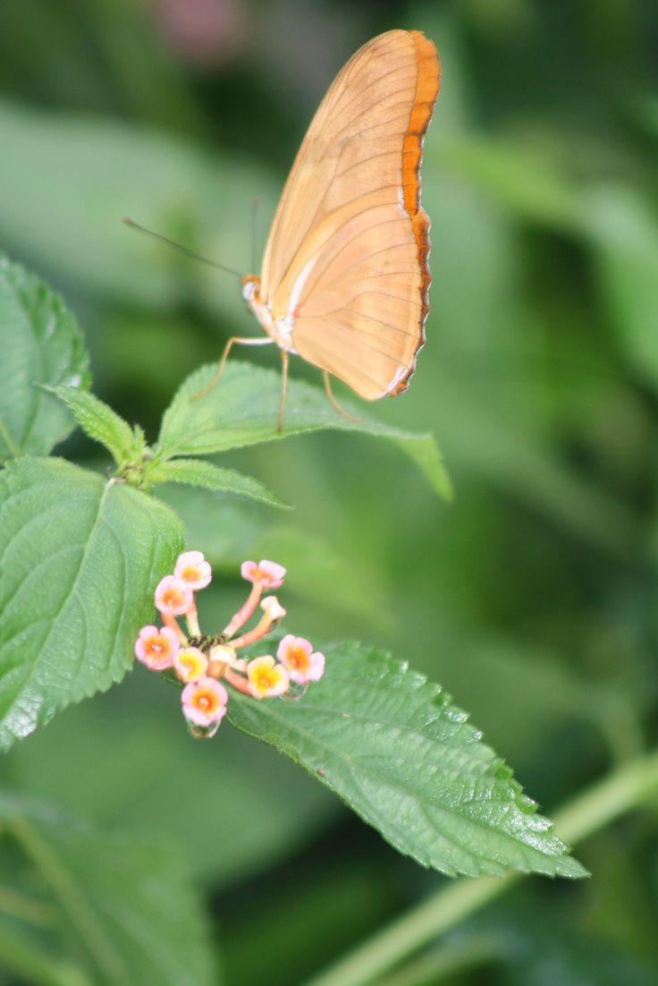 peach colored flower & butterfly