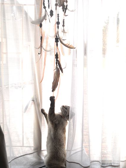 My cat Tenshi playing with the dream catcher.