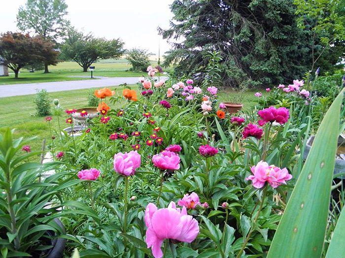 10 colorful plant combinations american meadows blog wildflower seedsside gardencolor combinationsgarden ideasplant