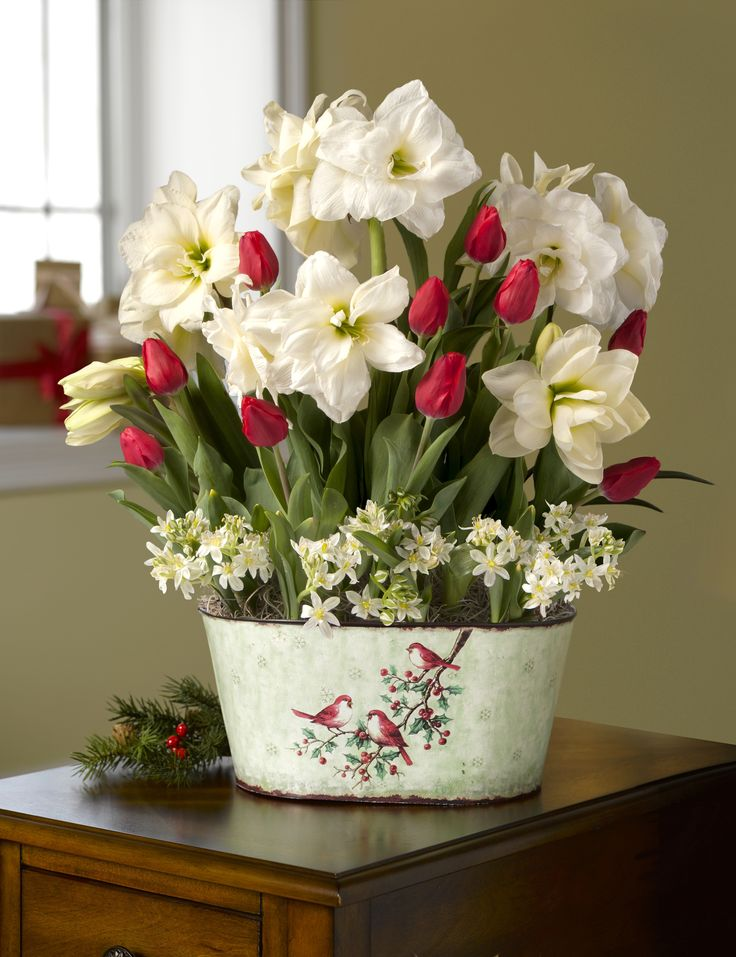 Deluxe Christmas Morning Blooms: Amaryllis, Tulips & Star of Bethlehem