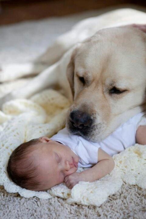 Kopek ve bebek