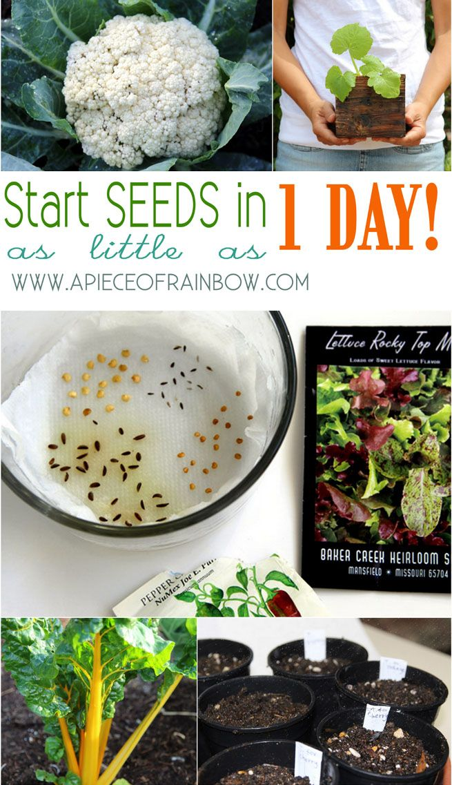 Super Fast & Easy - How to Start Seeds in 1/3 time with 300% more success!! - A Piece Of Rainbow