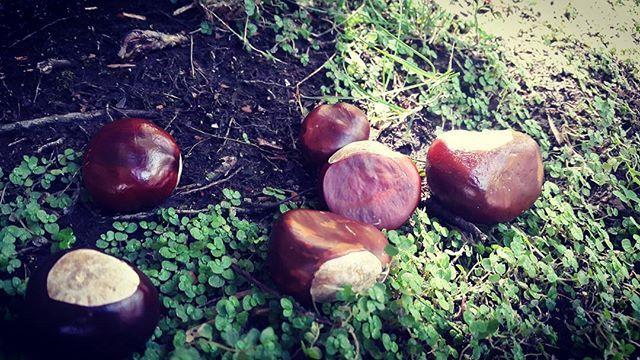 Definitivamente el otoño quiere  mostrar presencia...vamos a aprocechar y recoger estas castañas a ver que podemos hacer con ellas en casa. #otoño #castañas #naturaleza #asipiensaunamama #maternidadreal