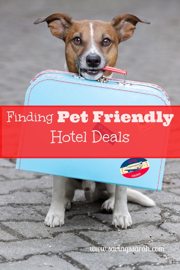 Between holiday and vacation travel, you may want to take your pets along for the trip. Here are three tips for finding Pet Friendly hotel deals when traveling with your four-legged family members.