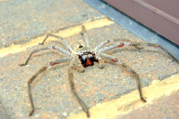 A huntsman spider walks along a brick windowsill.