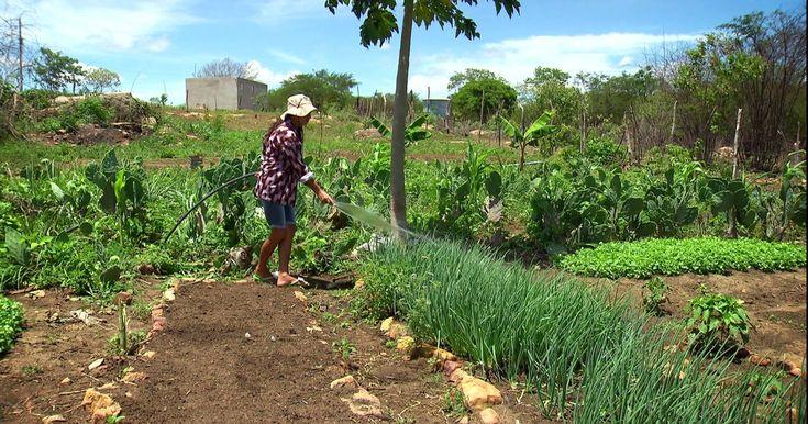 Agricultores de Pernambuco aprendem a produzir com pouca água