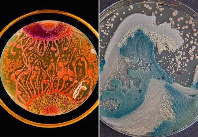 As bactérias não são propriedade apenas do mundo da Ciência. Alguns microbiologistas conseguiram provar que elas podem ser aplicadas no mundo da arte. Através de germes e micróbios foram criadas pinturas originais e releituras de icônicas obras. As composições competiram no American Society for Microbiology's, nos Estados Unidos, na primeira edição do desafio Agar Art. Cientistas do mundo todo criaram suas pinturas usando diferentes tipos de bactérias, micróbios e ágar, substância gelatinosa…