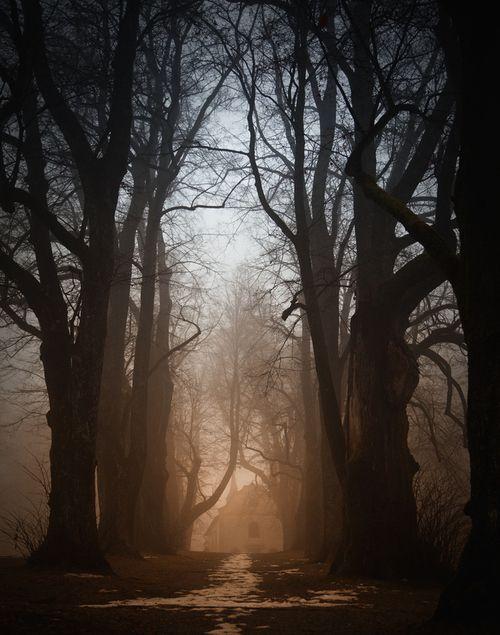 Black Forest singletrails