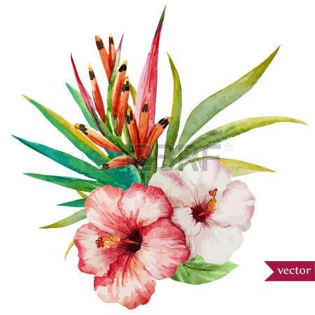 Ilustraci n hermosa del vector con bonitas flores tropicales Foto de archivo