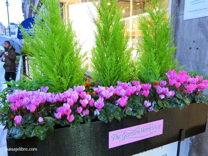 paisaje libre de plantas para jardineras en invierno