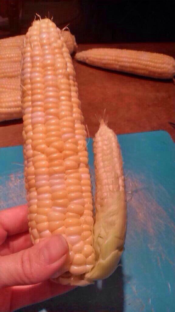 Amish dildo.  (Uni-corn)  #UnicornsDildos #passionateplayground