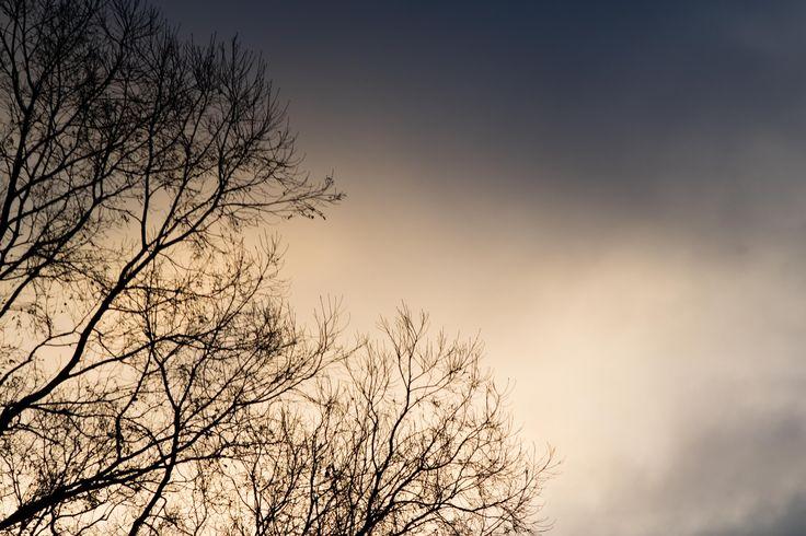 https://flic.kr/p/KDaAJb | colores de invierno | y la filigrana de los hualles