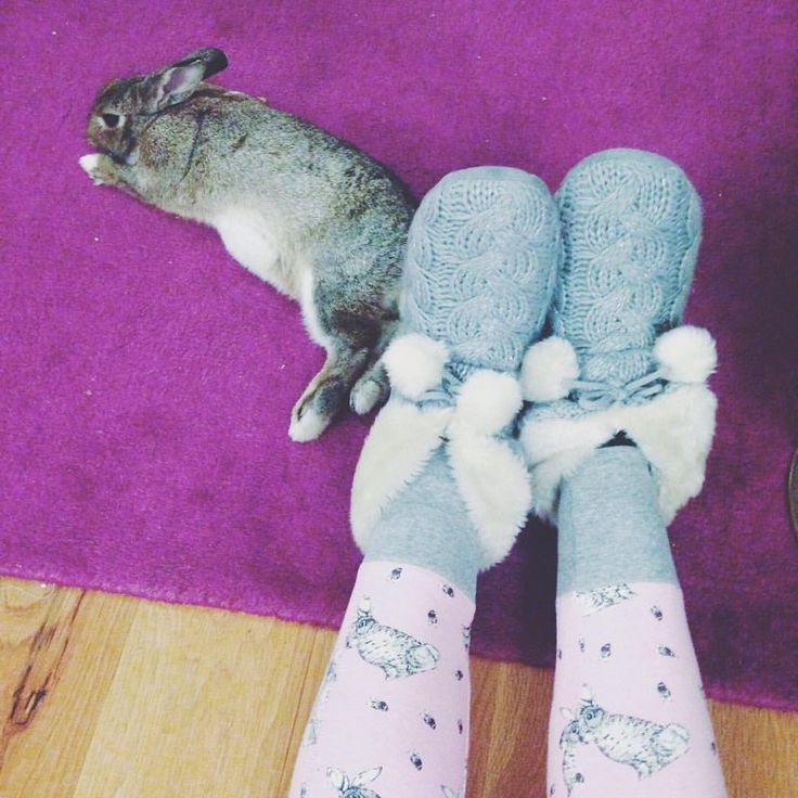 New bunny pjs and my real life cottontail  #perfect #theseareafewofmyfavoritethings #bunniesofinstagram #housebunny #crazybunnylady