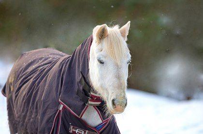 Readers Share Tips for Horse Blanket Repair and Maintenance - TheHorse.com | TheHorse.com readers share their tips for repairing and maintaining horse blankets year-round. #horses #blankets #horsetack