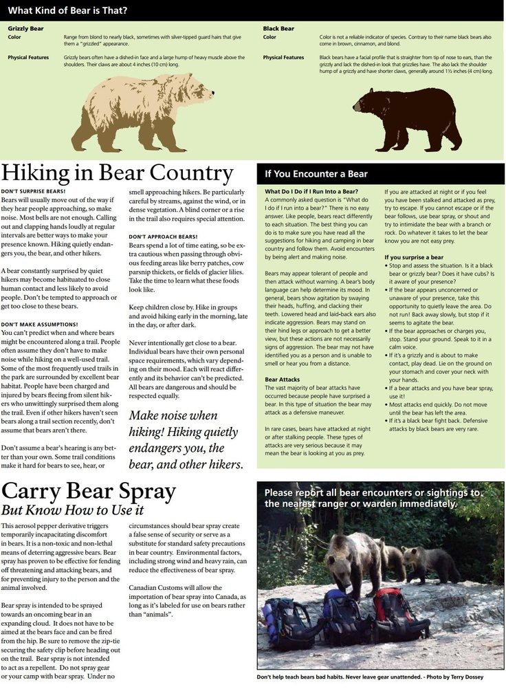 the main characteristics of bears and its species The most carnivorous of the bear species, polar bears feed primarily on the fat of ice-dependent the polar bear is the largest and most carnivorous member of the.