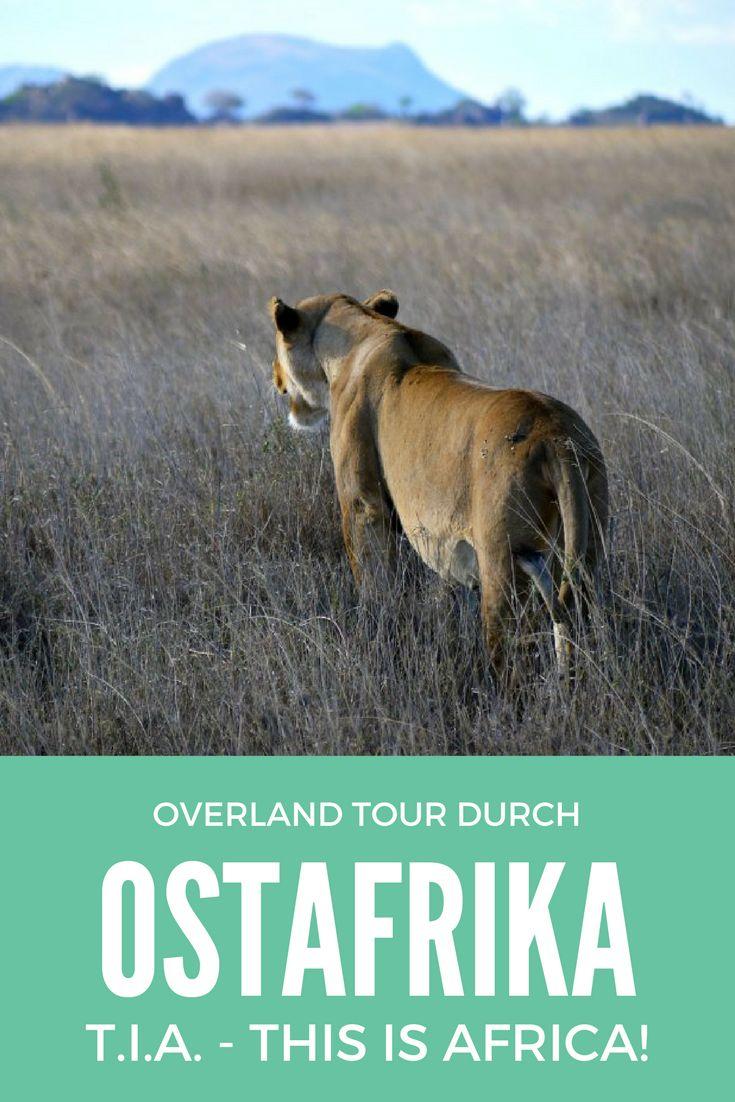 """Overland Tour durch Ostafrika: Für unsere Mehrtagestour in die Serengeti und den Ngorongoro Krater tauschten wir unseren Overland Truck gegen Safari-Jeeps ein, die uns von Arusha in den wohl bekanntesten Nationalpark der Welt bringen sollten. Zwei Nächte verbringen wir in einem Camp in der Serengeti und haben die Gelegenheit, mehrere Safaris zu unternehmen. Die Landschaft ist atemberaubend schön! Und wir haben Glück: Die """"Big Five"""" geben sich allesamt die Ehre. Hier eine Löwin, die…"""