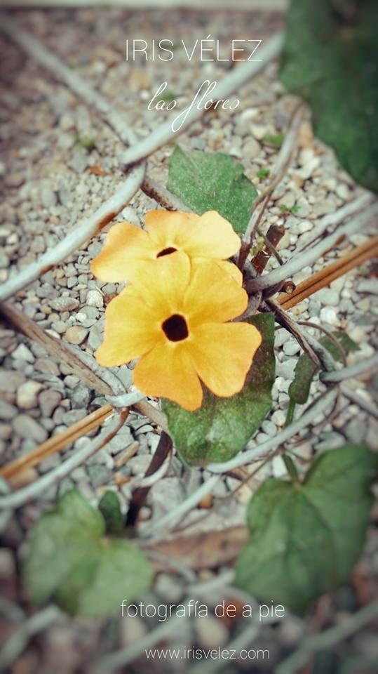 Las flores Medellin, Envigado.