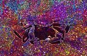 """New artwork for sale! - """" Sea Crab by PixBreak Art """" - http://ift.tt/2sEU6vh"""