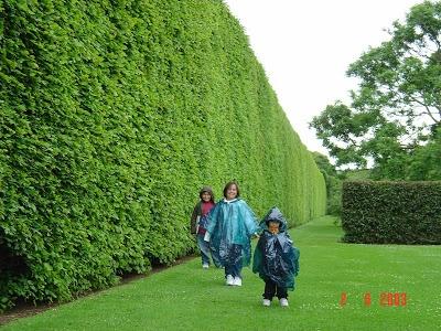 Green Giant Arborvitae Juniper Hi Brandon Thuja Arethuja Over Tomari Kurusu Yard Pinterest Hedges Garden And