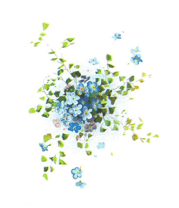 Free Vintage Flower Graphics | Antique Images: Free Flower Graphic: Forget-Me-Not Flowers Clip Art ...