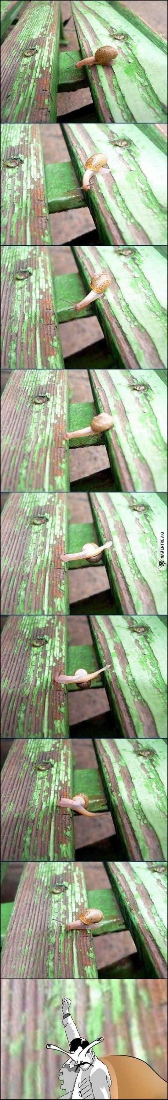 Até a vida de um caracol é mais emocionante que a minha