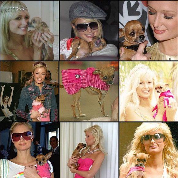 Paris Hilton est en deuil   HollywoodPQ.com