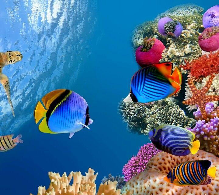 Aquatic Beauty