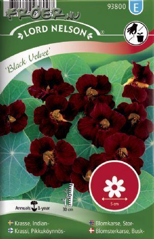Krasse, Busk- - 'Black Velvet' (Tropaeolum majus (Nanum-Gr))