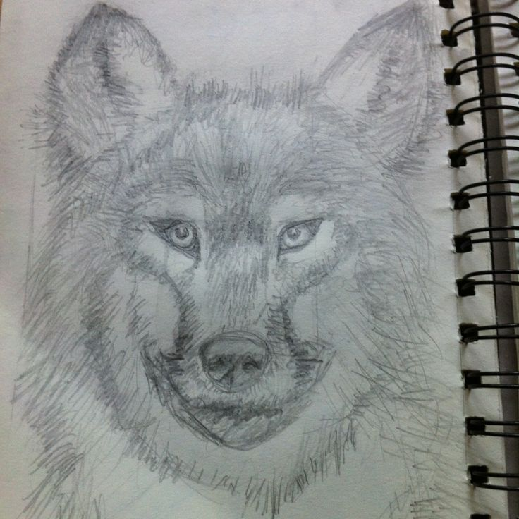 After many, MANY attempts, I draw a wolf :)