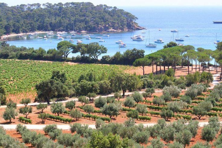 Sulla strada dei vini di Bormes les Mimosas #ViaggiFrancia #ViaggiLitorale #MareFrancia #ViaggiBormeslesMimosas #RDVFrance #Rendezvousenfrance