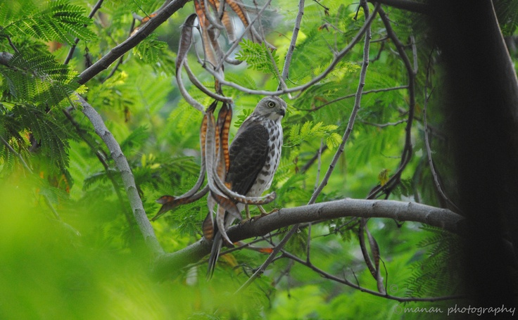 bird photography @ nalsarovar
