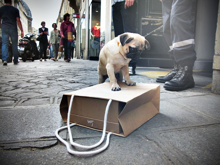 Cuz Pugs know their style!: Louboutin, Animals, Pug Life, Bag, Puppy, Pug Pup, Things, Dog, Baby Pugs