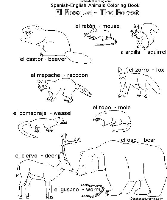 spanish animals of africa - Google Search : Hola Classroom : Pinterest : Spanish, Africa and Animals