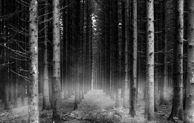 Download Free Black And White Forest Wallpaper Forest Wallpaper Dark Wallpaper Wallpaper Backgrounds