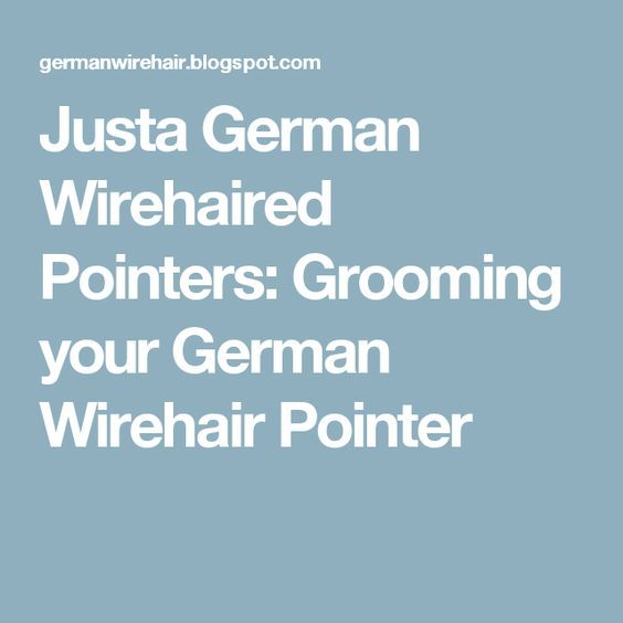 Justa German Wirehaired Pointers: Grooming your German Wirehair Pointer