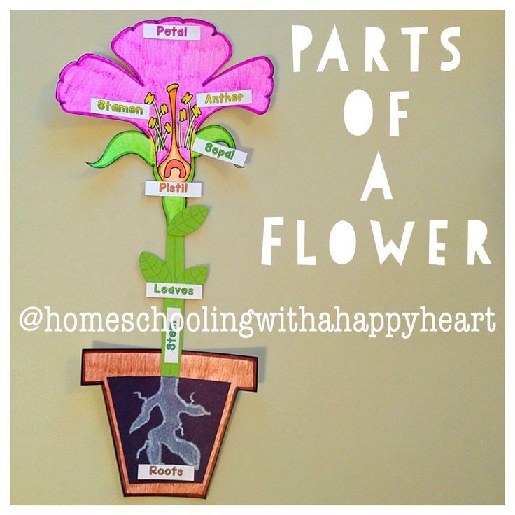 Classical Conversations Parts of a flower craft packet from Instagram: @homeschoolingwithahappyheart