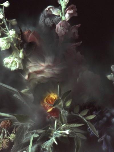 Ori Gersht.: Ory Gersht, Art Vortex, Flowershop Anthropology, Art Collection, Big Bangs, Life Photography, Bloom Bangs, Gersht Big, Anthropology Ory