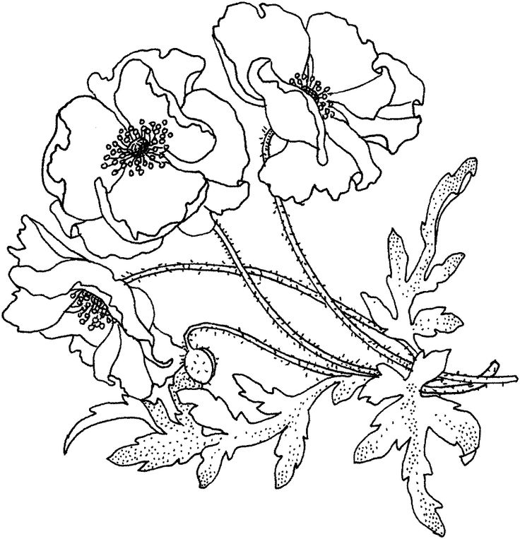 Poppies Flower Coloring Page From Category Select 21745 Printable Crafts Of Cartoons Nature Animals Bible And Many More