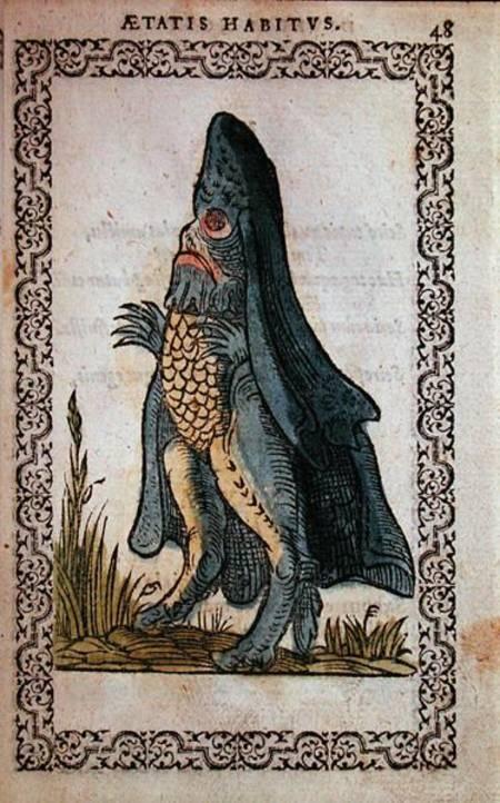 'Aetatus Habitus' #Bishopsfish #Seamonk