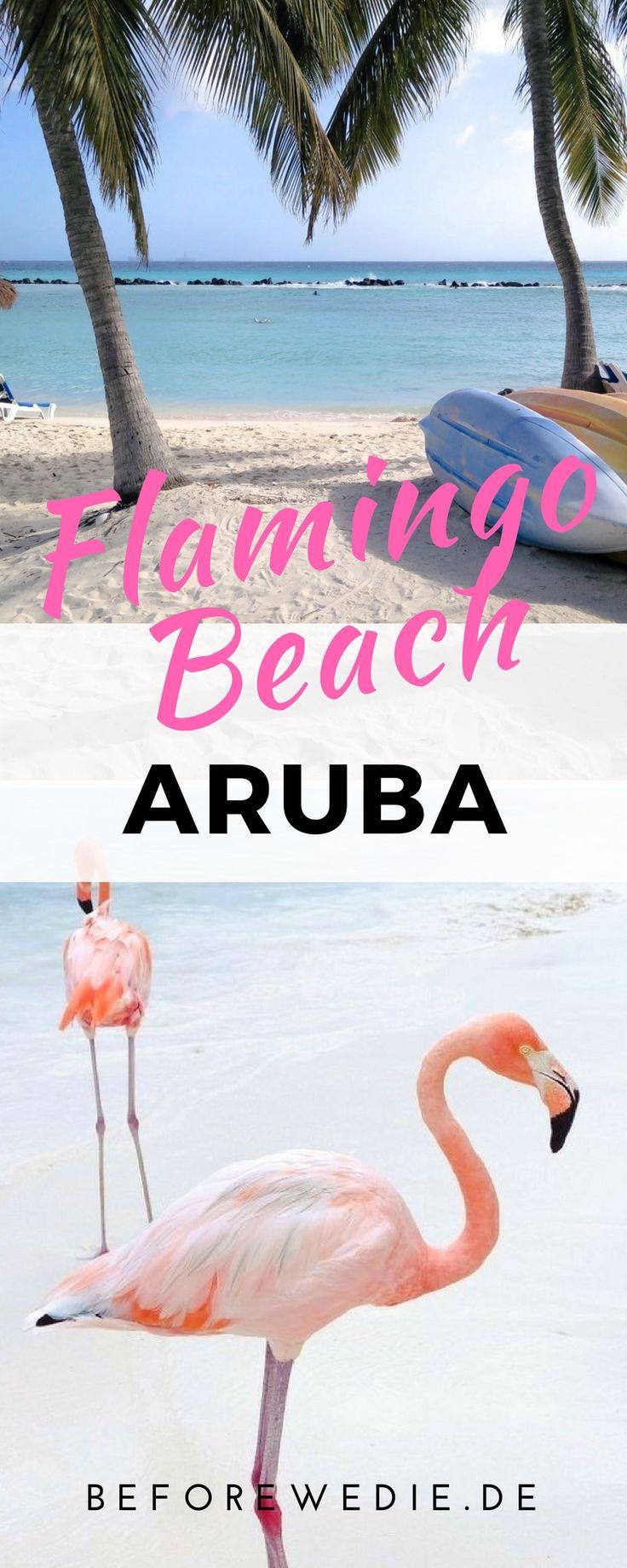 Baden mit Flamingos: Das geht nur am Flamingo Beach auf Aruba
