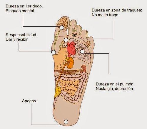 come abbassare l'acido urico nel sangue como disolver calculos renales de acido urico creatinina y acido urico altos