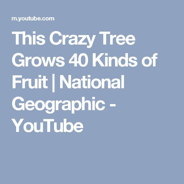 This Crazy Tree Grows 40 Kinds of Fruit | National Geographic - YouTube