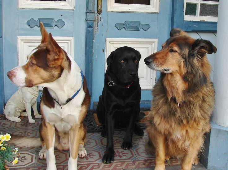 Patensuche für die Hunde im Tierheim Radauti-Rumänien